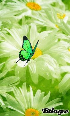 GREEN BUTTERFLY & DAISIES Butterfly Gif, Green Butterfly, Butterfly Wallpaper, Green Wallpaper, Butterfly Kisses, Beautiful Gif, Beautiful Gardens, Beautiful Horses, Types Of Butterflies