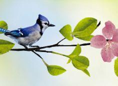 Nature,Birds