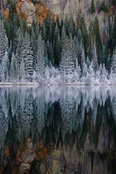 • Christmas snow winter cold lake trees ice river pine trees philosopherintraining •