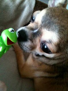 Kermit the Frog meets my Smilla Ildegarde!