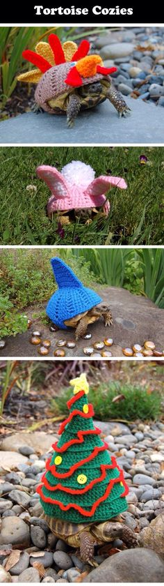 Every turtle needs a sweater. :)