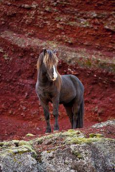 Stunning horse, stunning backdrop