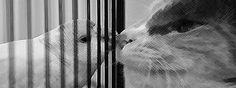 Muhabbet kuşu, Muhabbet kuşları, Muhabbet kuşu bakımı, muhabbet kuşu eğitimi…