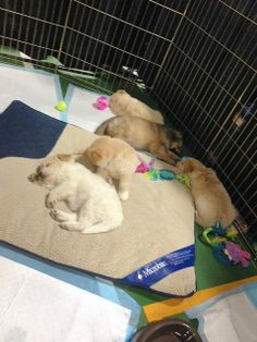 Adoptable pups from the Victoria Humane Society having a nap. — at Vancouver Island Pet Expo.