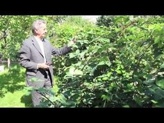 Ivan Hričovský: Rez beztŕňových černíc Thornfree - YouTube Gardens, Teacher, Garden, Garden Types, Yards, Formal Gardens