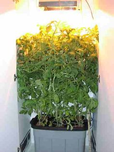 Homemade Grow Box Weed I really like this system. It is a