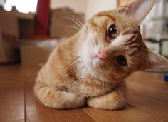 Love orange cats