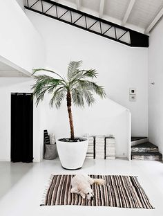 entrance with big plant and rug Image by Morten Holtum via Bo Bedre pinned by barefootblogin.com