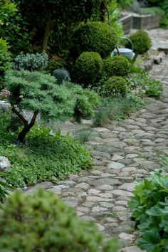 would love a stone path around the side of the house or surrounding the garden beds.