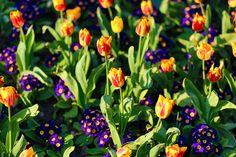 Flowers in the park last weekend. www.lenslocker.co.uk