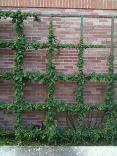 34 ideas for privacy in the garden with a decorative.htm 34 best backyard wall art images backyard  garden design  garden  34 best backyard wall art images