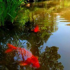 Rockford Japanese Gardens