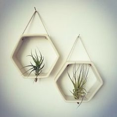Porcelain Honeycomb Air plant Holder, Geometric Wall Hanging Planter by Revisions in Marquette, MI Hanging Air Plants, Hanging Plant Wall, Hanging Planters, Indoor Plants, Diy Wall Planter, Succulent Wall Planter, Vertical Wall Planters, Planter Pots, Planter Ideas