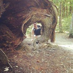California National, State, Regional & Local Parks - CaliParks Big Basin Redwoods, Local Parks, Park Photos, Park City, Regional, State Parks, California, Travel, Instagram