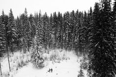 📌 winter snow trees  - get this free picture at Avopix.com    📷 https://avopix.com/photo/20670-winter-snow-trees    #winter #fir #snow #tree #trees #avopix #free #photos #public #domain