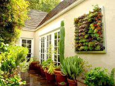 Garden in a frame. Vertical wall systems from Urban Zeal.