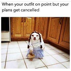#TomorrowIsHalloween !!! The nerve!!! Who is taking this PAW out to #trickortreat ?? #furrypawlife www.furrypawpics.com #instart #petart #art #Halloween #MischiefNight #funnydog #instyle #fashion #wizardofoz
