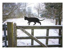 Tuindecoratie - Prowling Garden Cat, Metal Cat Ornament, Scarecrow - Een uniek product van Jolyon_Yates op DaWanda