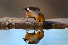 reflective photography.