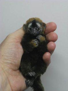 Ooak Lemur Baby Monkey Handmade Mini Artist Bear Doll Gift BY Angelica | eBay