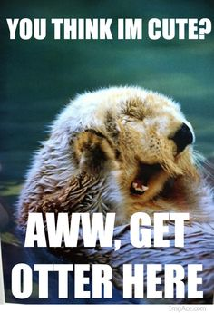 Let me rephrase, I think you're cute, get your cute butt otter here or ill drag it here cause no. Just no.