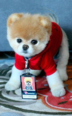 Resultado de imagen para perrito boo