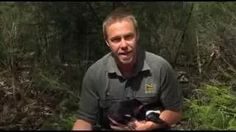 dr. chris and tasmanian devils - YouTube