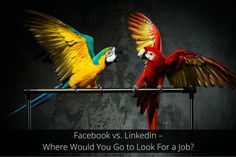 Facebook vs. LinkedIn – Where Would You Go to Look For a Job?  ||   Considering over 1 billion people worldwide use Facebook every day, you'd think that as a co... https://www.social-hire.com/blog/recruitment/facebook-vs-linkedin--where-would-you-go-to-look-for-a-job/?utm_campaign=crowdfire&utm_content=crowdfire&utm_medium=social&utm_source=pinterest