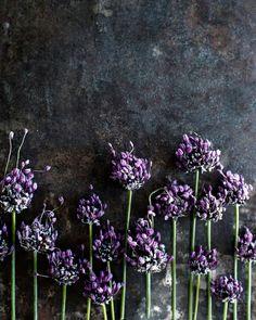 Edge Reps | Ditte Isager | Food | Portfolio