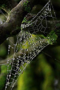 Spiderwebs and Dew Drops Dew Drops, Rain Drops, Photographie Macro Nature, Spider Art, Spider Webs, Photo Macro, In Natura, Water Droplets, Natural Wonders