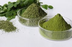 Moringa: Natural Cancer Killer and Anti-Diabetes Herb'Moringa Oleifera' is the full name of this herb that grows mostly in South Asia. It is a very big part of the traditional medicine there and goes als. Natural Medicine, Herbal Medicine, Ayurvedic Medicine, Natural Cures, Natural Health, Natural Life, Moringa Powder, Healthy Herbs, Stay Healthy