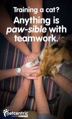For cats, verbal commands are less important than actions. Check out this article at Petcentric.com for even more cat training techniques and ideas that your whole family can be a part of!