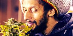 Julian Marley's cannabis company has been slapped with a law suit. Read more on #StonedInsider