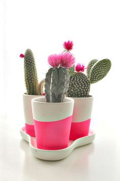 cactus and pink. Painted Plant Pots, Painted Flower Pots, Cactus Plante, Flower Pot Design, Terrarium Plants, Cactus Y Suculentas, Plant Illustration, Easy Garden, Cactus Flower
