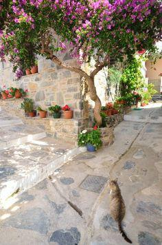 Skopelos Greece..where Mamma Mia was shot!
