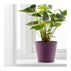 "SOCKER Plant pot - 6 "" - IKEA"