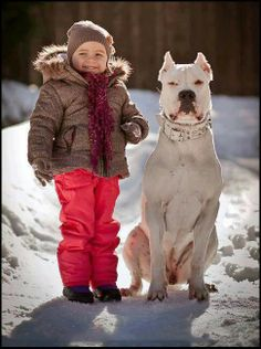 #Dogo #Argentino with his friend