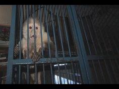 10 Examples of Animals Under Arrest