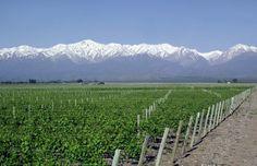 Vineyards of Mendoza, Argentina #FerllenWinery