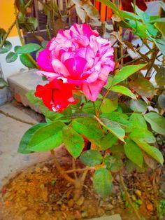 Flores que alegran el día 🏵 ·  #flowers #flower #flores #nature #love #floral #spring #florence #florist #florals #flor #floripa #beautiful #flors #bloom #flora #flore #florya #florenz #floral_secrets