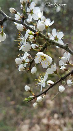 Hidden Garden, Primroses, Spring Sign, New Leaf, Drawing, Love Flowers, New Beginnings, Graphic, Illustration