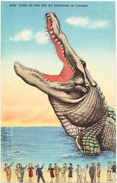 Vintage Florida Postcard - Come Up and See Me Sometime