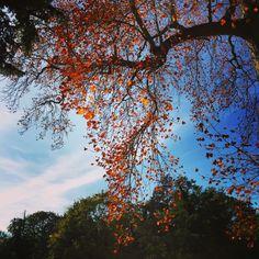 Cascading autumn