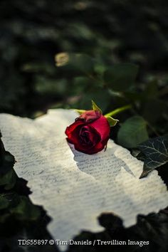 Trevillion Images - red-rose-and-old-letter