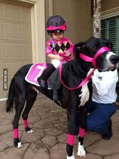 Great Dane Dog dressed up as a Horse giving a Little Girl a Pony Ride Pet Halloween Costumes, Cool Costumes, Costumes 2015, Big Dog Halloween Costumes, Baby Costumes, Kids Horse Costume, Large Dog Costumes, Costume Ideas, Pet Costumes For Dogs