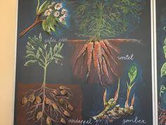 Plantkunde klas 5 vbs de regenboog Eindhoven, Annemarie Vermeulen