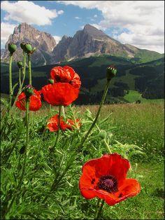 The red of summer... / Italia: Trentino - Alto Adige by Mau and Tweety (mau_tweety) on Flickr