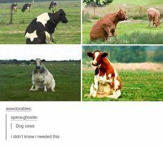 Dog cows.
