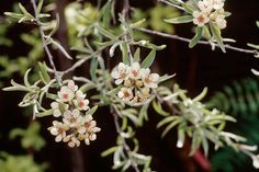 Discover 20 of the best trees to grow in small gardens, including trees for fruit, flowers and foliage – from the experts at BBC Gardeners' World Magazine.