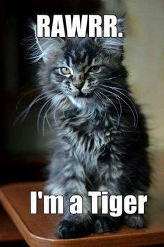 RAWRR. I'm a tiger.